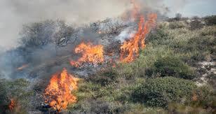 Ordinanza Sindacale n. 11 del 7 maggio 2021 - Dichiarazione dello stato di grave pericolosità per gli incendi boschivi nell'anno 2021, ai sensi della L. 353/2000, della L.R. 38/2016 e L.R. 53/2019 - Pulizia terreni e aree incolte